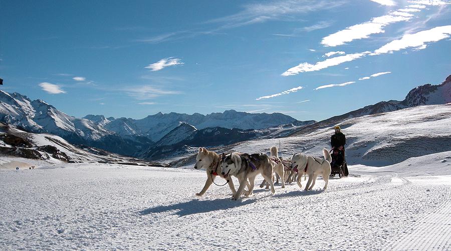 trineo-huskies