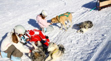 Niños jugando con perros de trineo de nieve