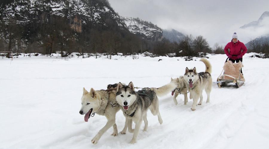 Trineos de perros husky en el pirineo